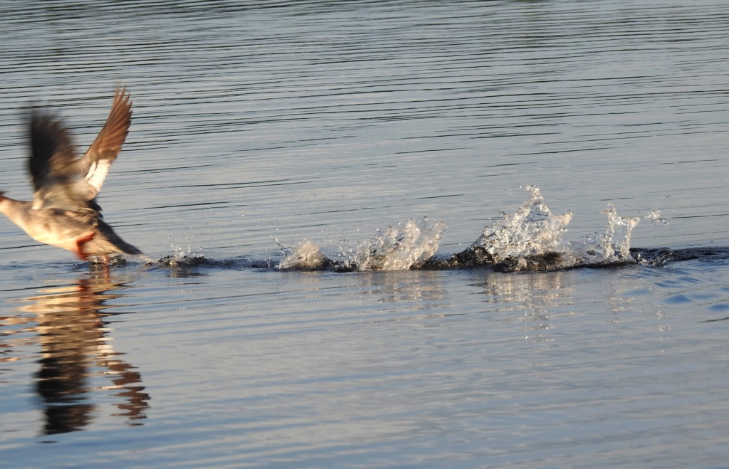 <°)))))<  Paysages du Lac Bouchette  - Page 2 J2020-36