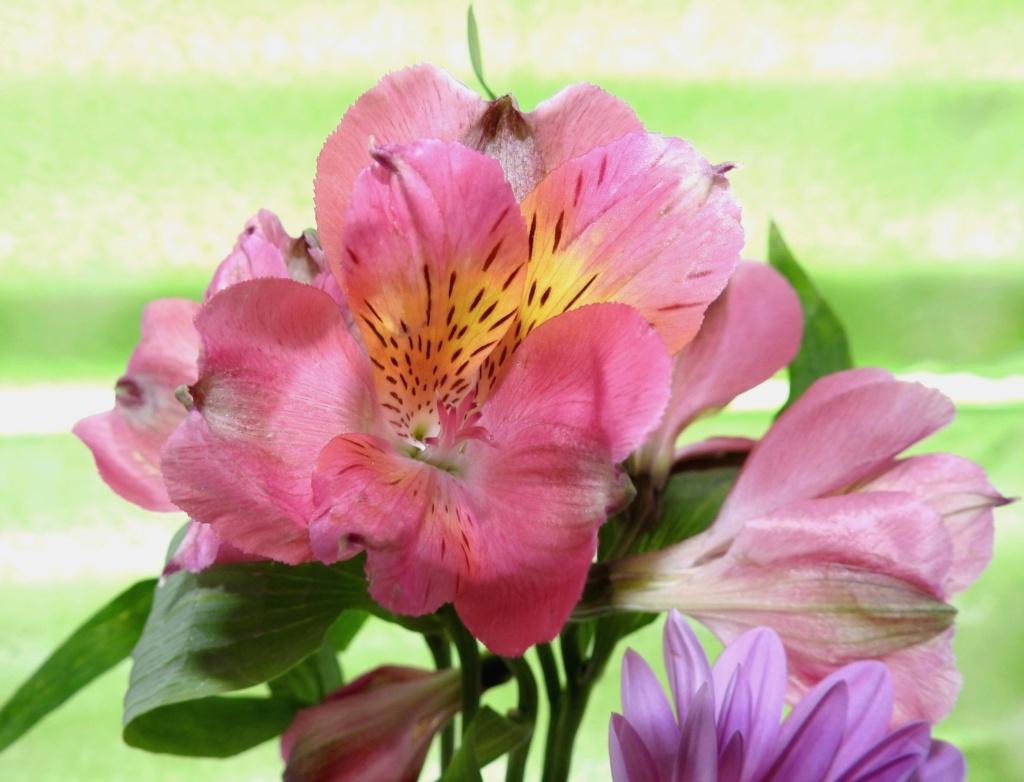 Rose rose R2018-10