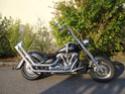 ma Wild star pig's bike Wildpi10