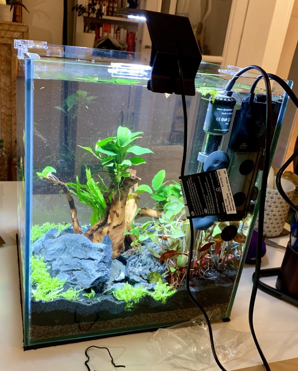 Nanocube 30L - Retour à l'aquariophilie! 504ad210