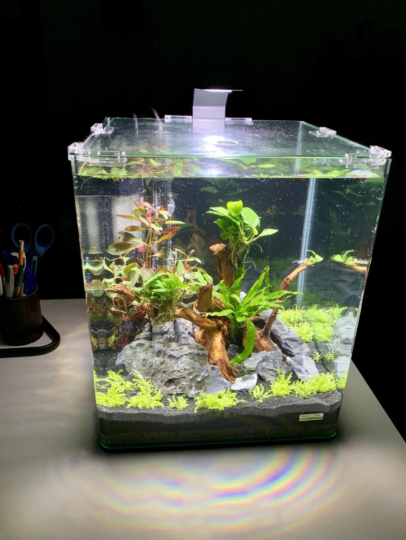 Nanocube 30L - Retour à l'aquariophilie! 616d8e10