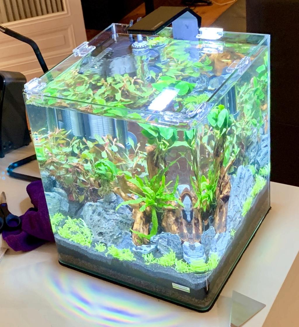 Nanocube 30L - Retour à l'aquariophilie! 7f591f10