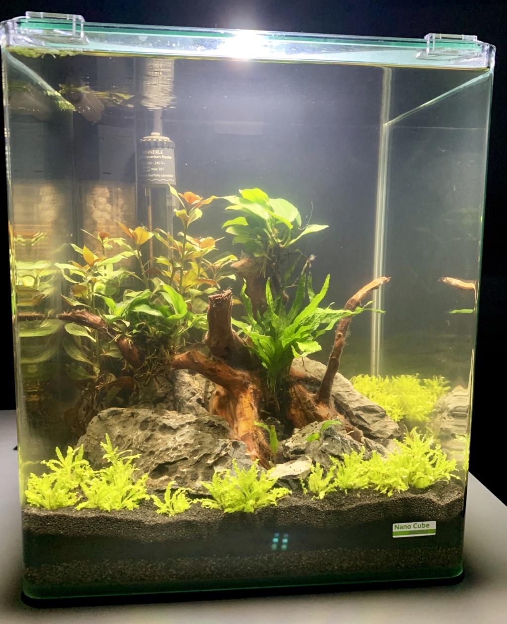Nanocube 30L - Retour à l'aquariophilie! 902ad110