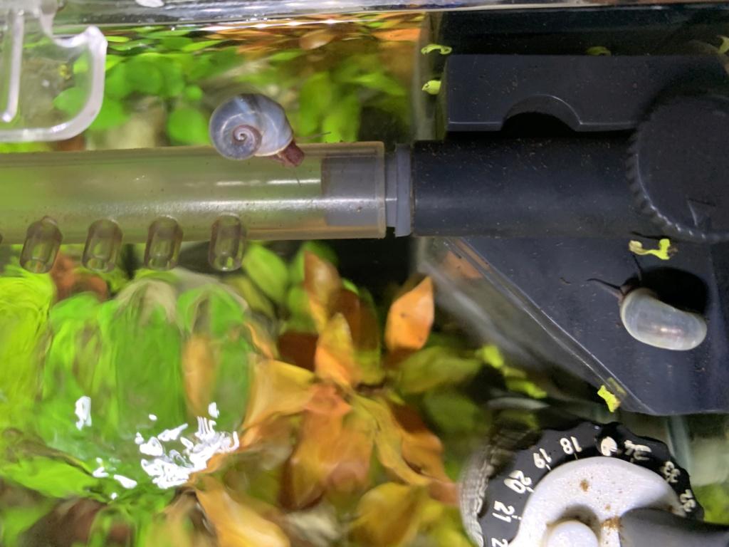 Nanocube 30L - Retour à l'aquariophilie! D37d6710