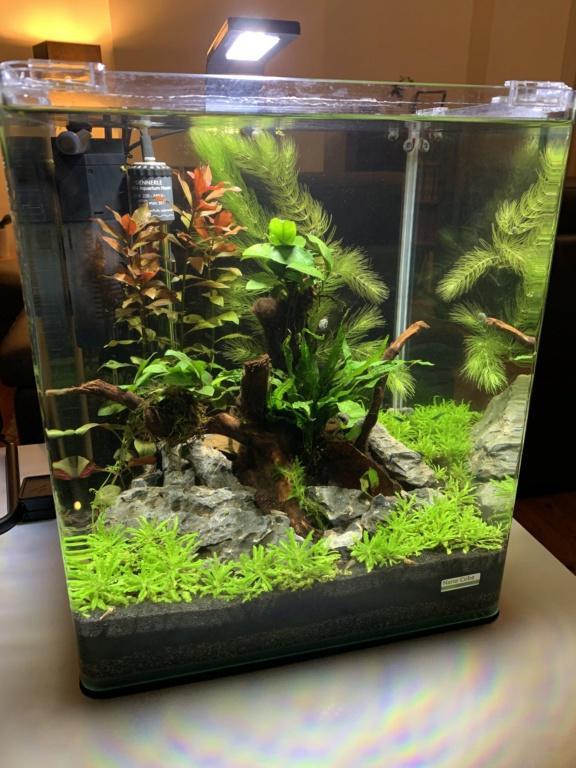 Nanocube 30L - Retour à l'aquariophilie! D706fa10