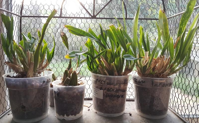 Mes orchidées et leur lieu de culture à la maison  20190311