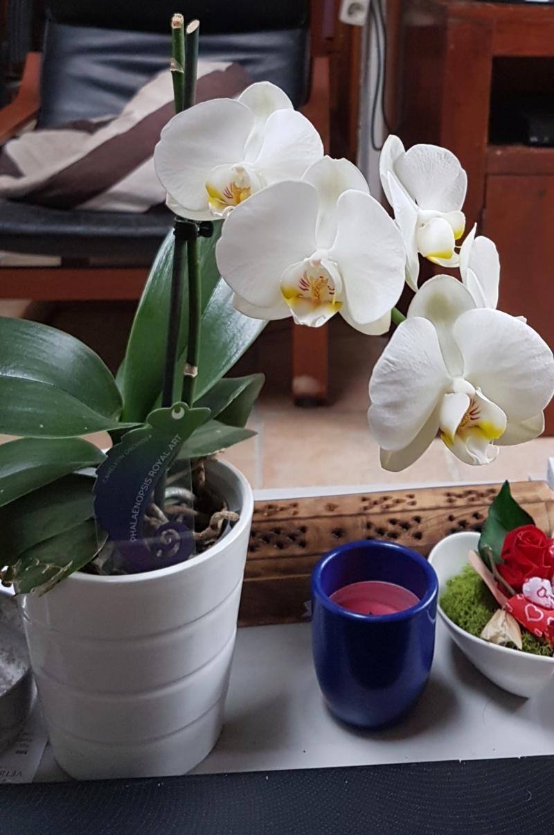 Mes orchidées et leur lieu de culture à la maison  20190313