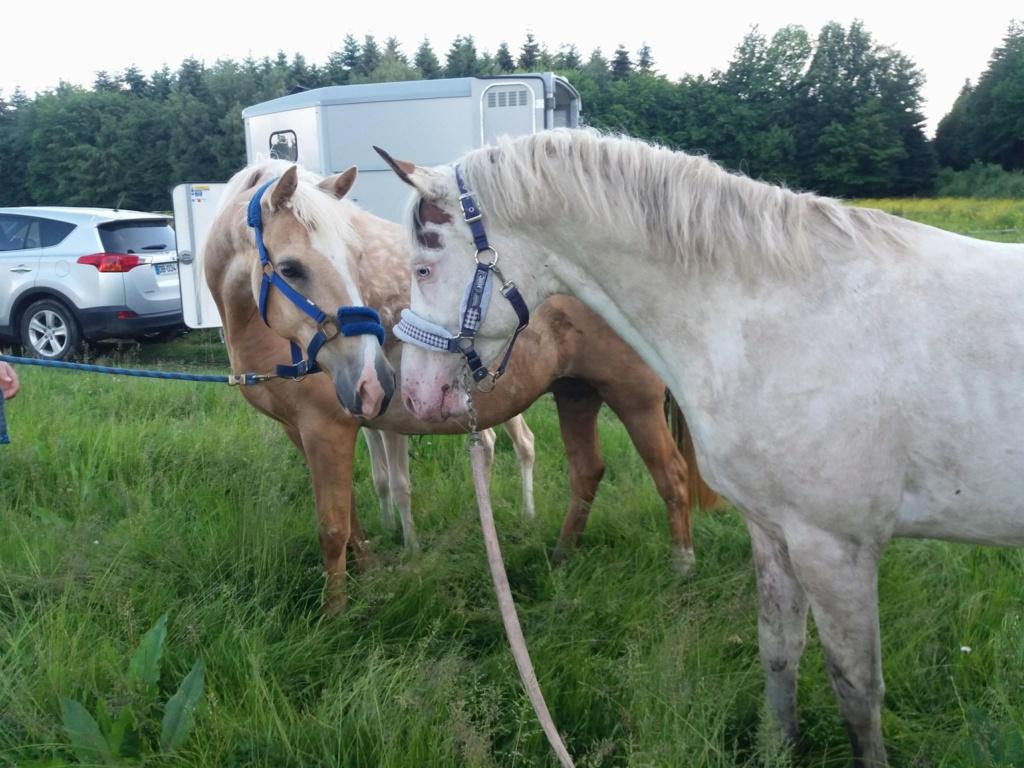 Les chevaux Dorélia  - Page 36 34105910