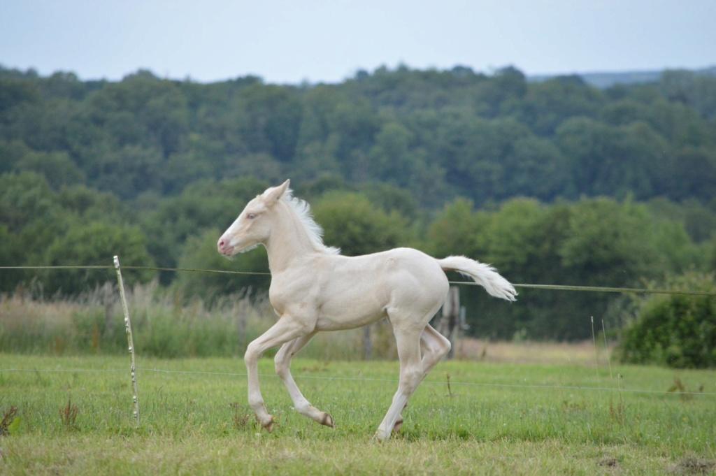 Les chevaux Dorélia  - Page 36 35530510