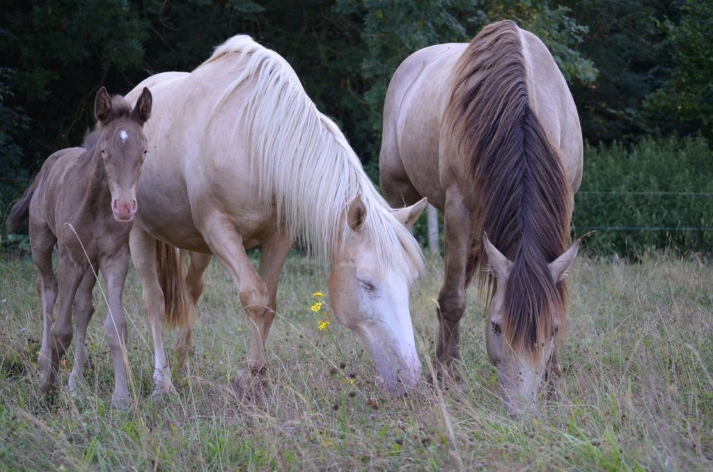 Les chevaux Dorélia  - Page 36 36805410