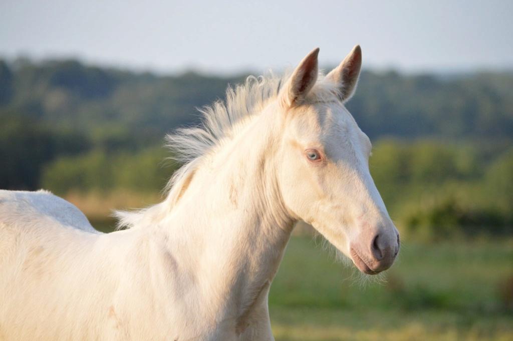 Les chevaux Dorélia  - Page 36 37038910