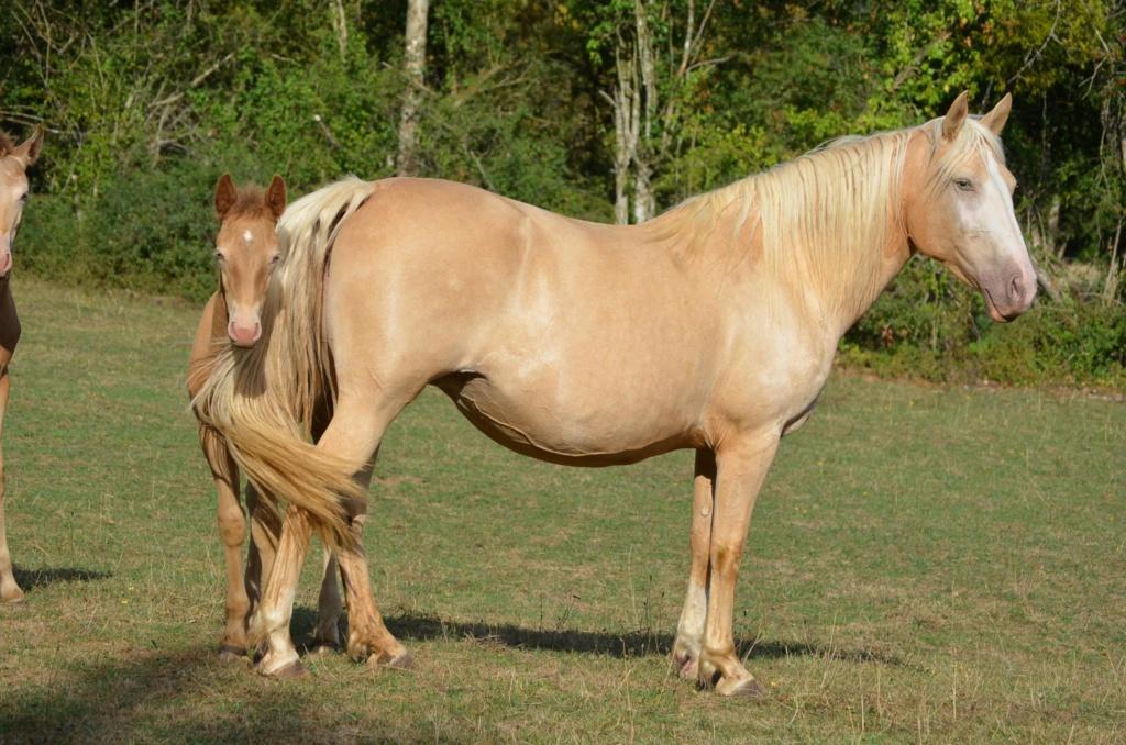Les chevaux Dorélia  - Page 36 39569810