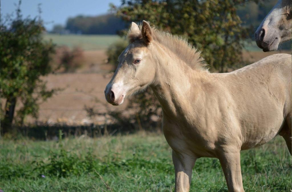 Les chevaux Dorélia  - Page 36 42324410
