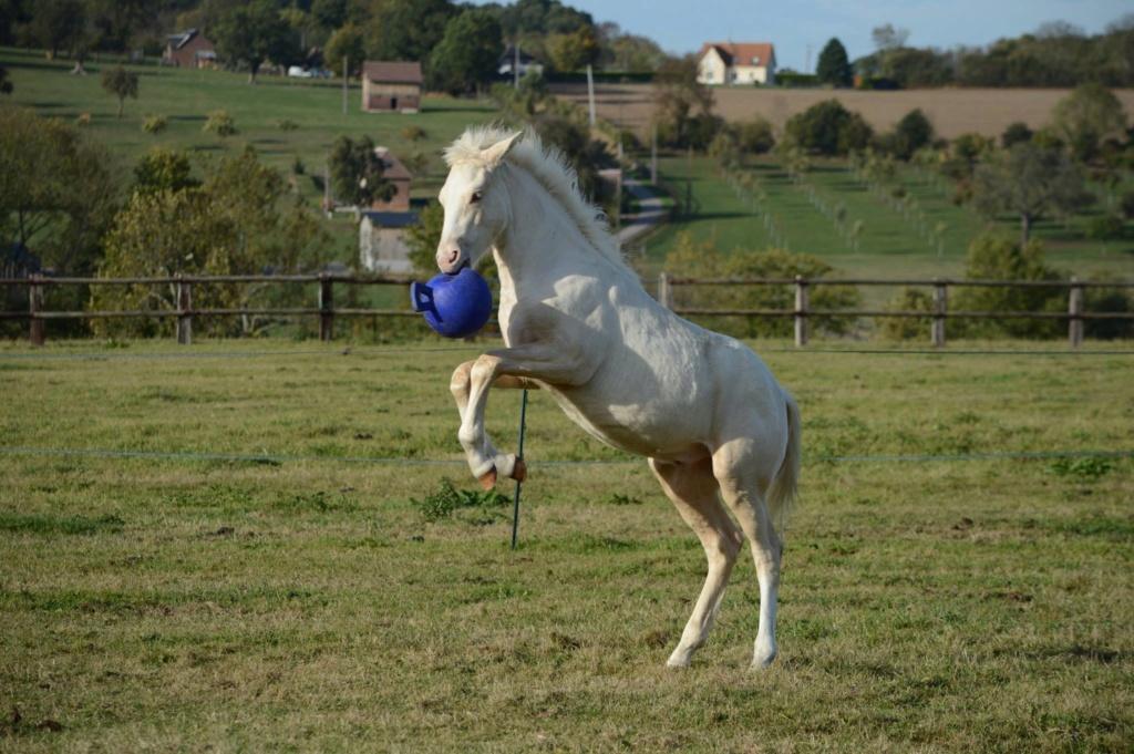 Les chevaux Dorélia  - Page 36 43878710