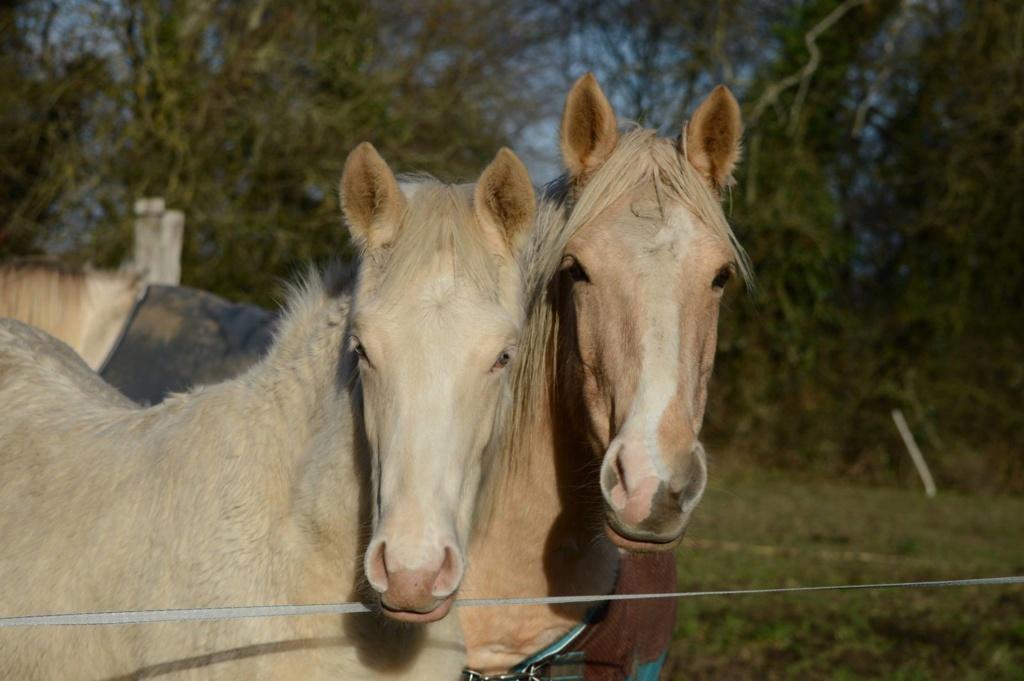 Les chevaux Dorélia  - Page 36 47152410