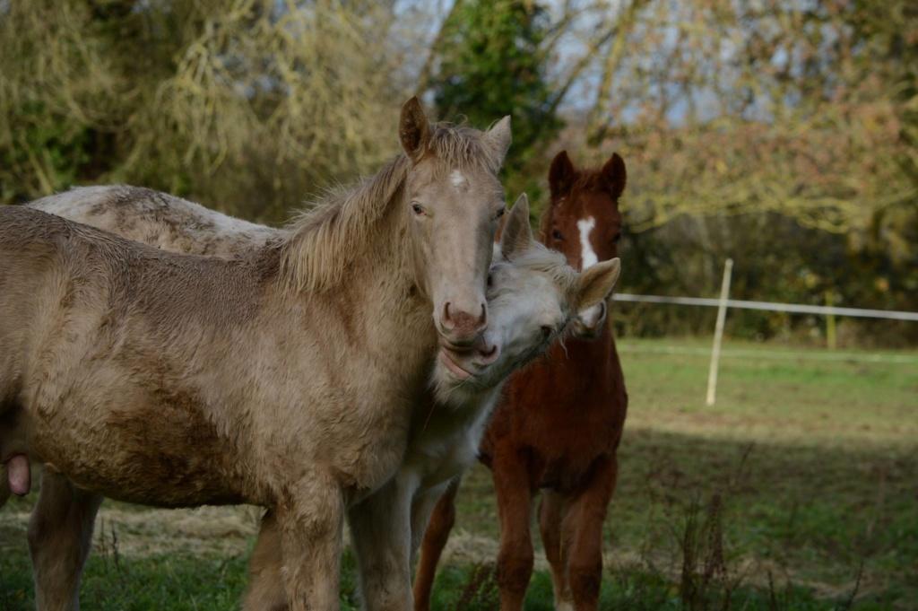 Les chevaux Dorélia  - Page 36 48368910