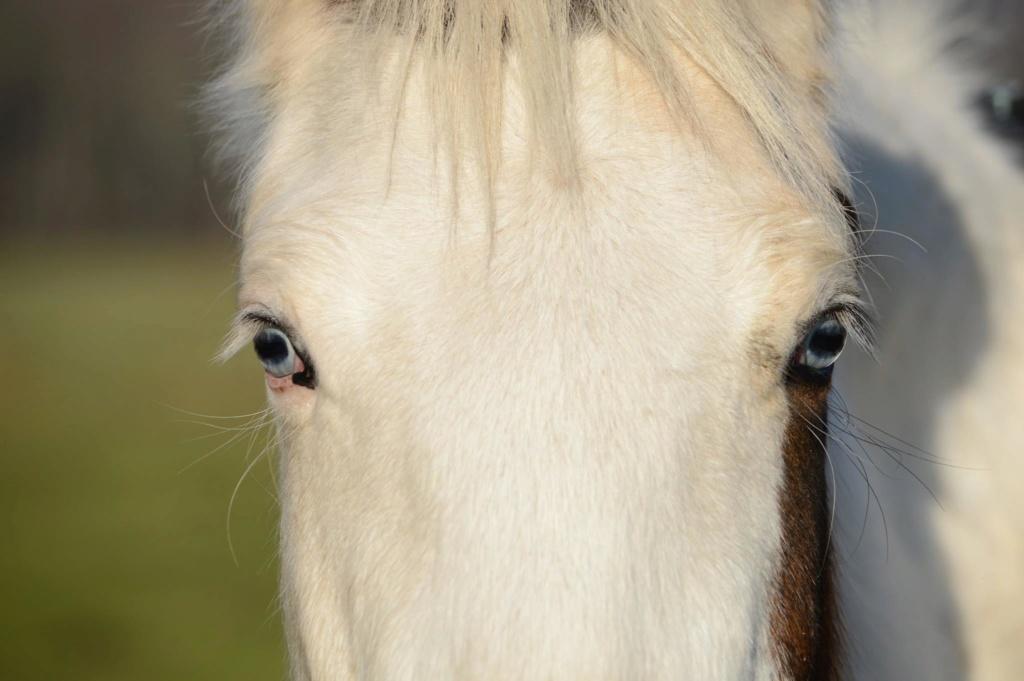 Les chevaux Dorélia  - Page 36 50420010