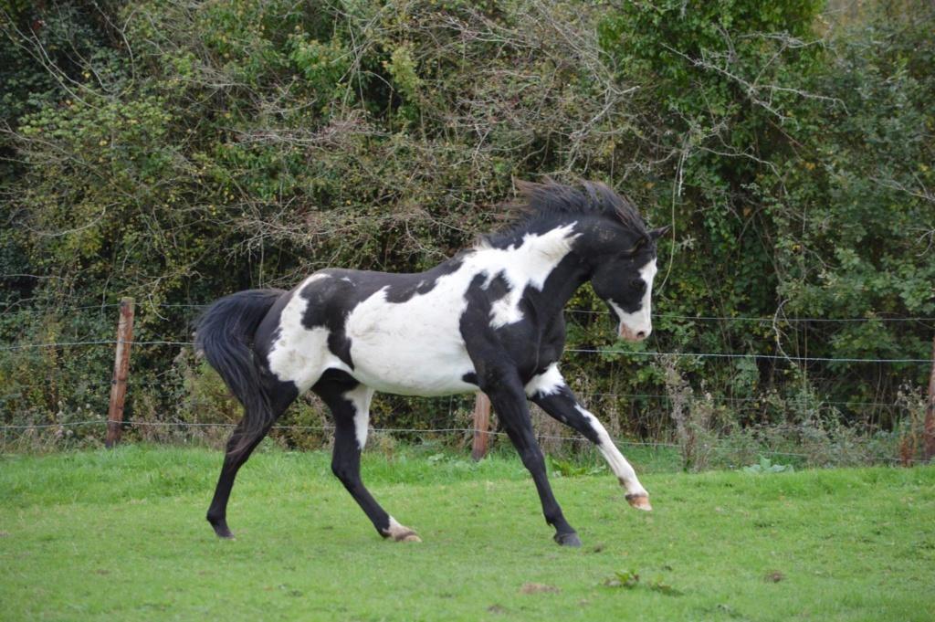 Les chevaux Dorélia  - Page 36 50461610