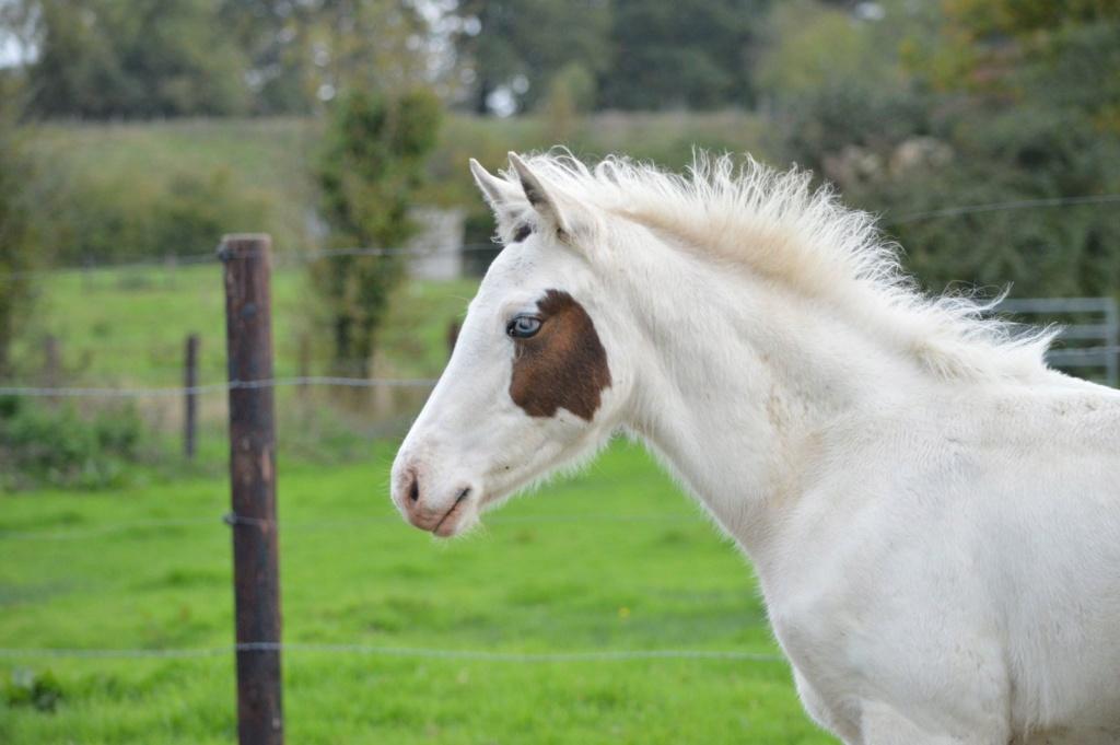 Les chevaux Dorélia  - Page 36 50754110
