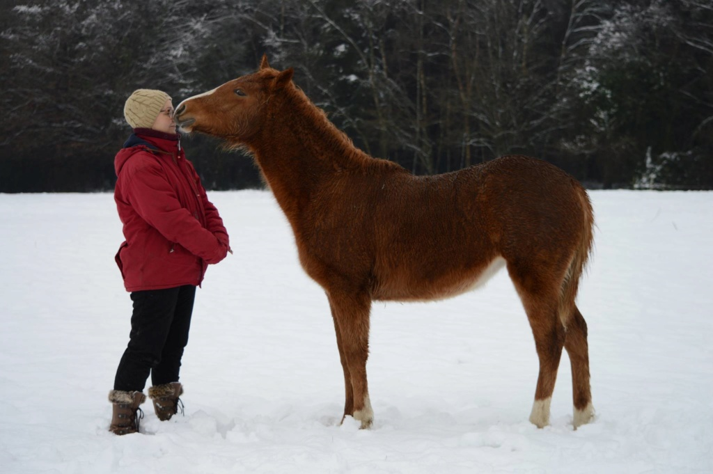 Les chevaux Dorélia  - Page 36 50917010