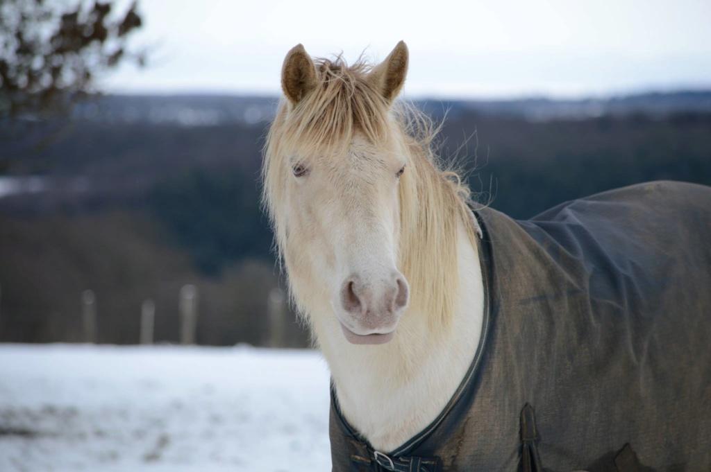 Les chevaux Dorélia  - Page 36 50949410
