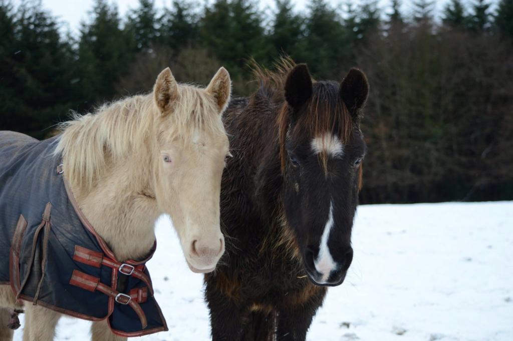 Les chevaux Dorélia  - Page 36 51064510