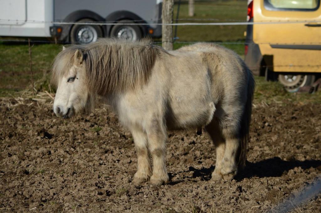 Les chevaux Dorélia  - Page 36 52896710