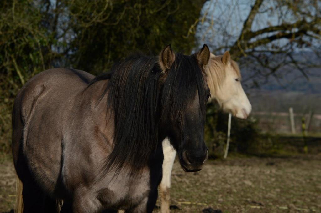 Les chevaux Dorélia  - Page 36 52964810