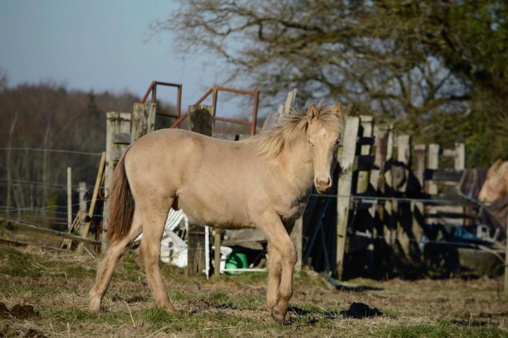 Les chevaux Dorélia  - Page 36 53005010