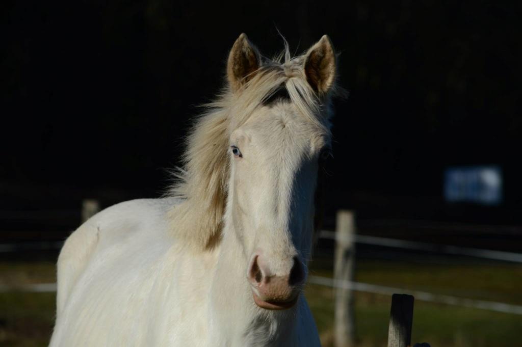 Les chevaux Dorélia  - Page 36 53482110