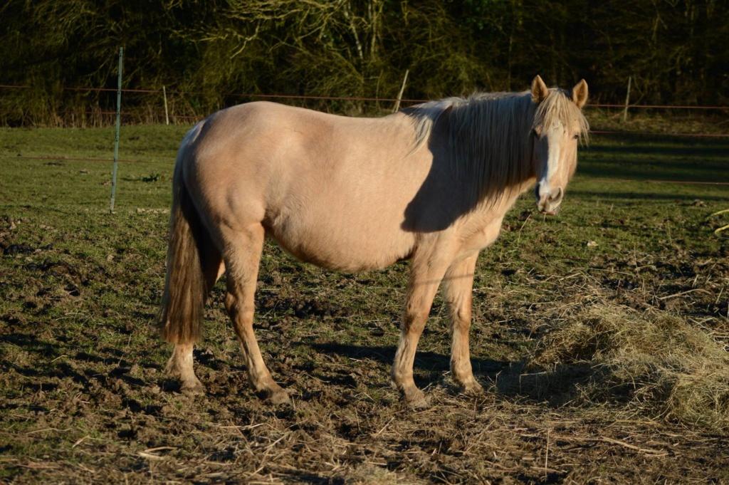 Les chevaux Dorélia  - Page 36 53684110