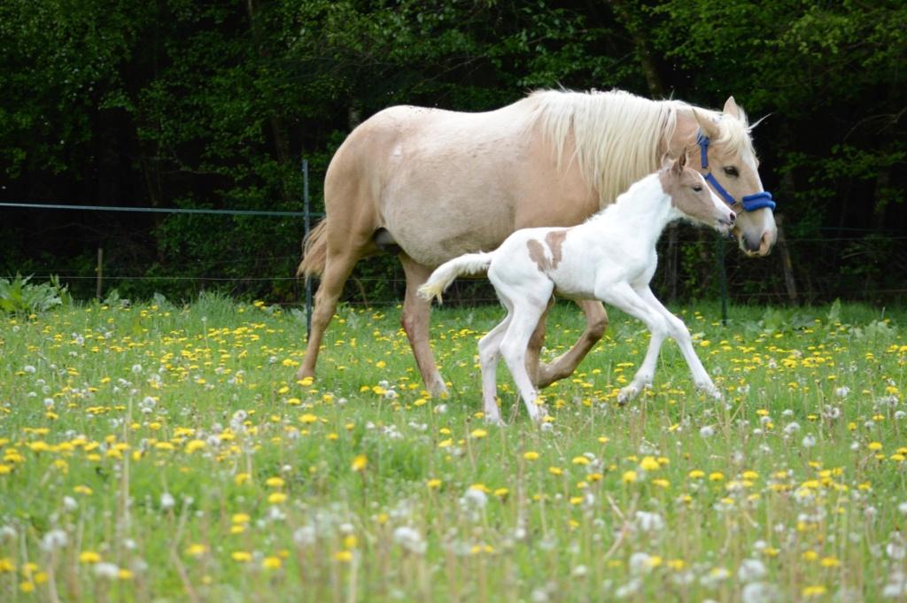 Les chevaux Dorélia  - Page 36 59244110
