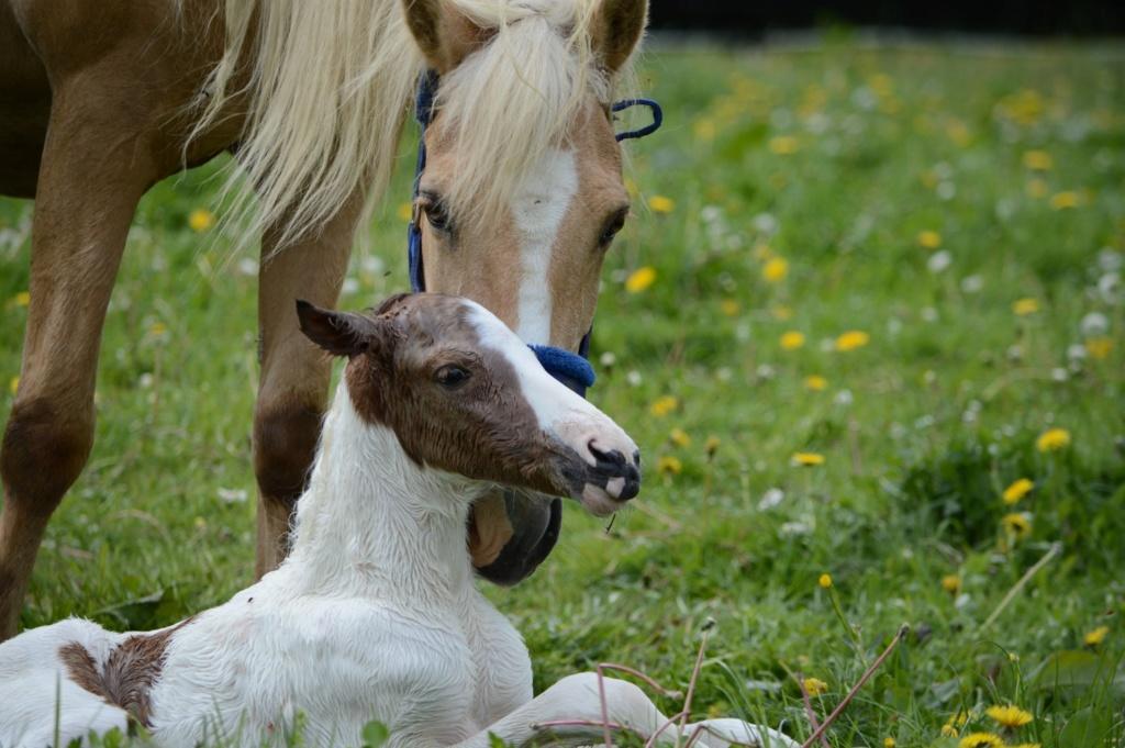 Les chevaux Dorélia  - Page 36 59549110