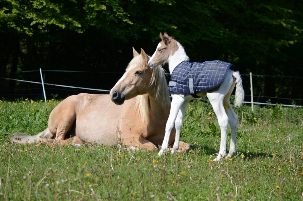Les chevaux Dorélia  - Page 36 59581810