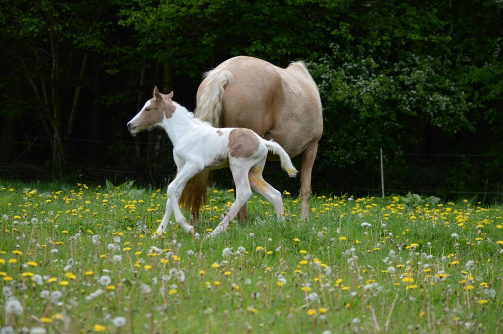 Les chevaux Dorélia  - Page 36 59701110