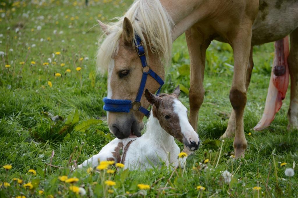 Les chevaux Dorélia  - Page 36 59709710