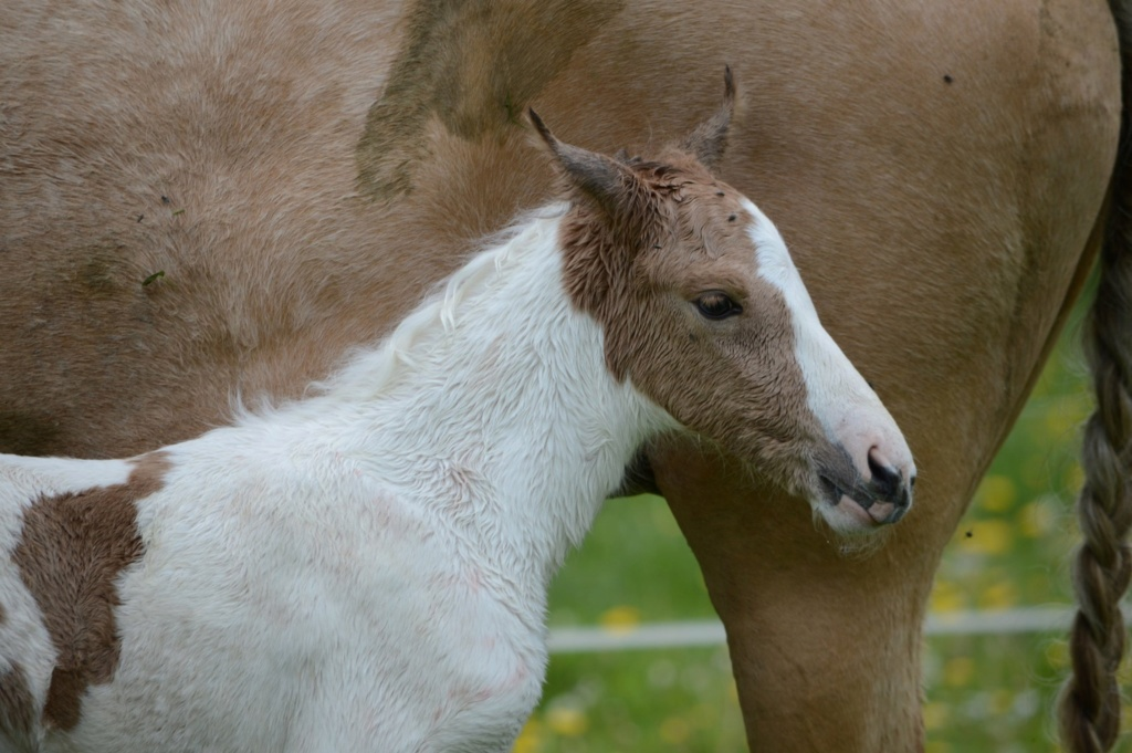 Les chevaux Dorélia  - Page 36 59743910