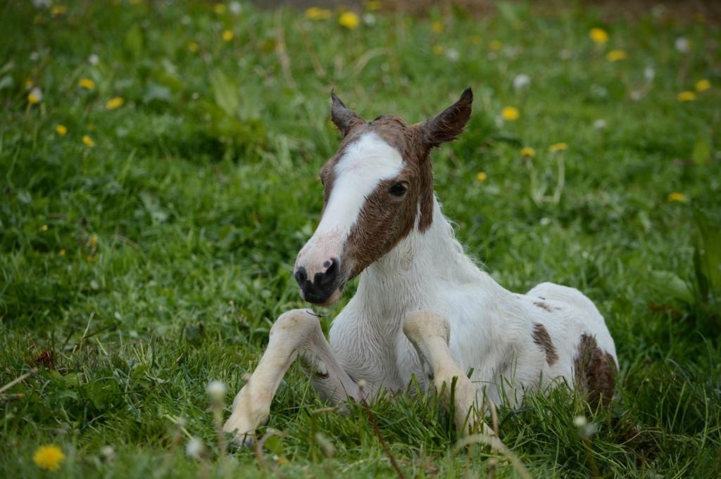 Les chevaux Dorélia  - Page 36 59744710