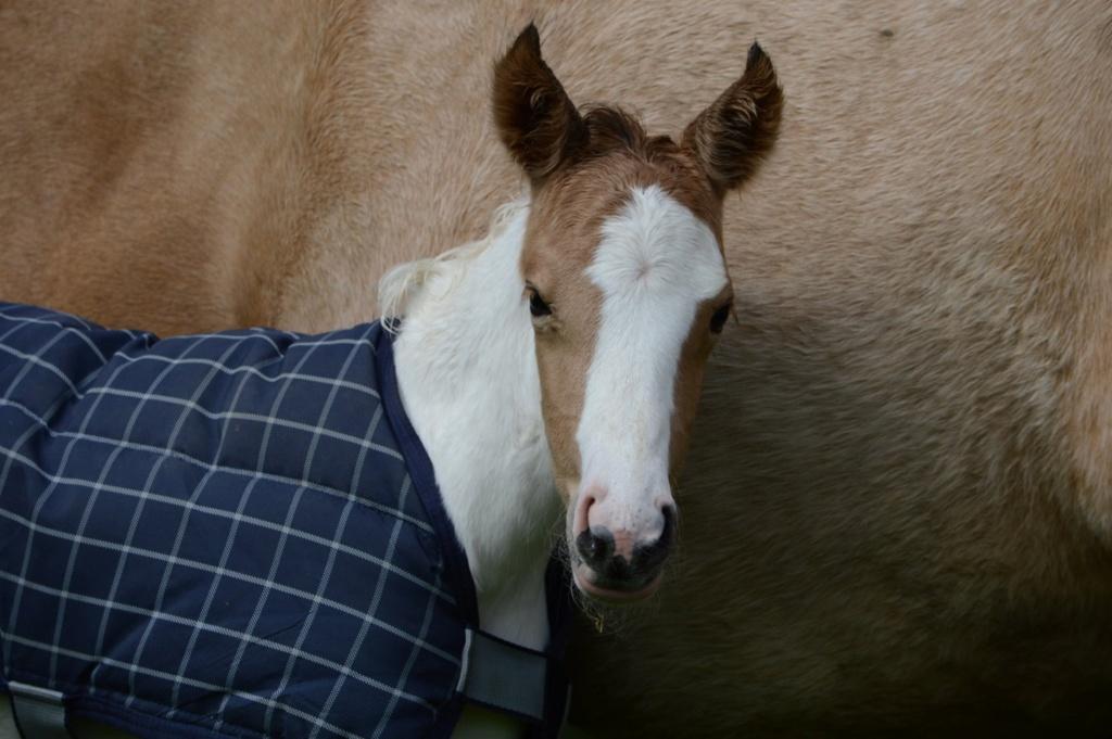 Les chevaux Dorélia  - Page 36 59883210