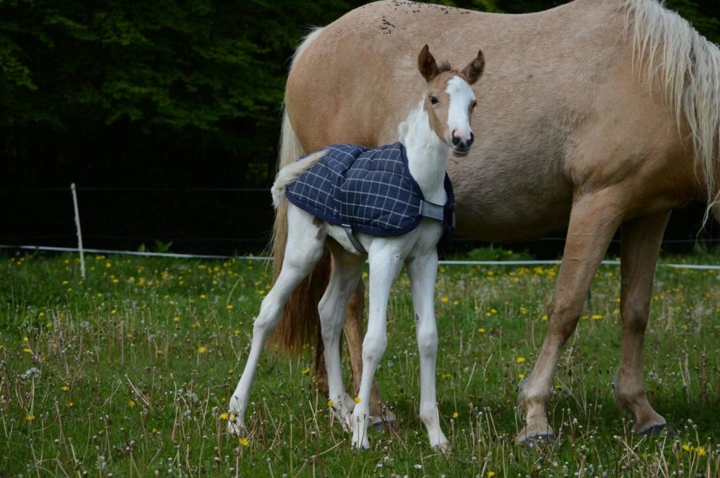 Les chevaux Dorélia  - Page 36 60249410