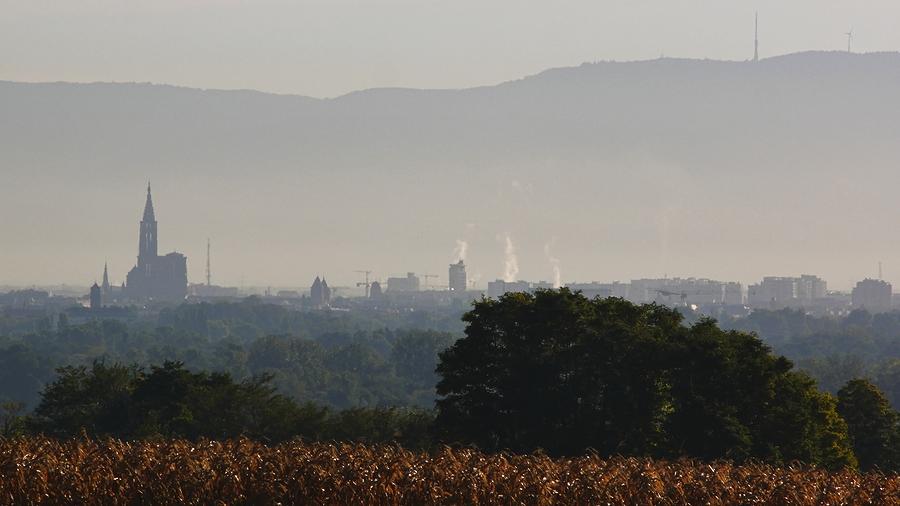 Début de journée en plaine d'Alsace. P1120012