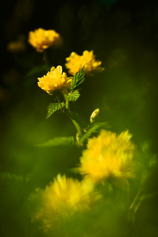 Yellow mellow P1150210