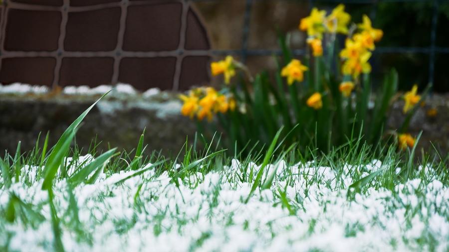"""Concours photos avril 2021 """"C'est le printemps"""" P1310210"""