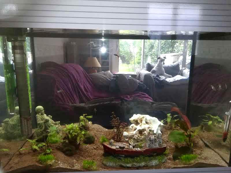 Mon premier aquarium Aquari10