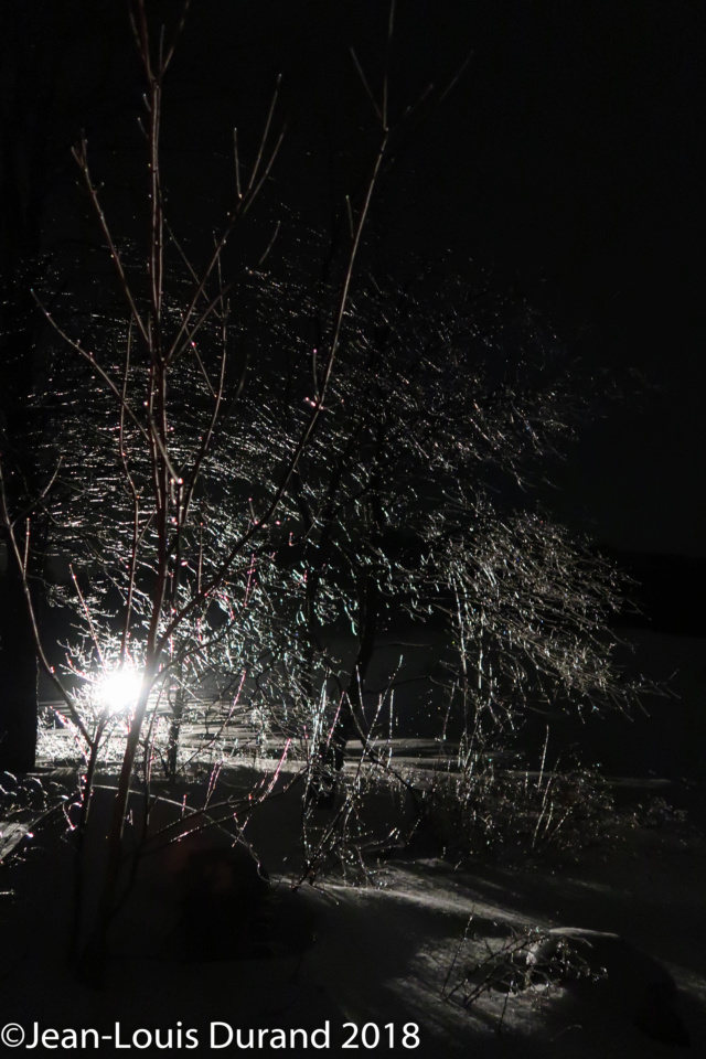 Réveillon du 31 dans la forêt Img_0512