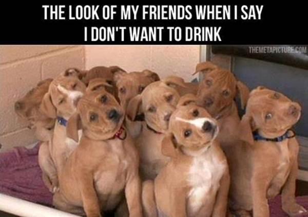 Memes and Funny Stuff Friend10