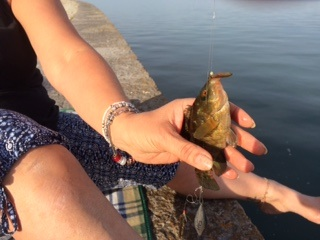 One Tip For Holyhead Breakwater Wrasse Fishing  Image16