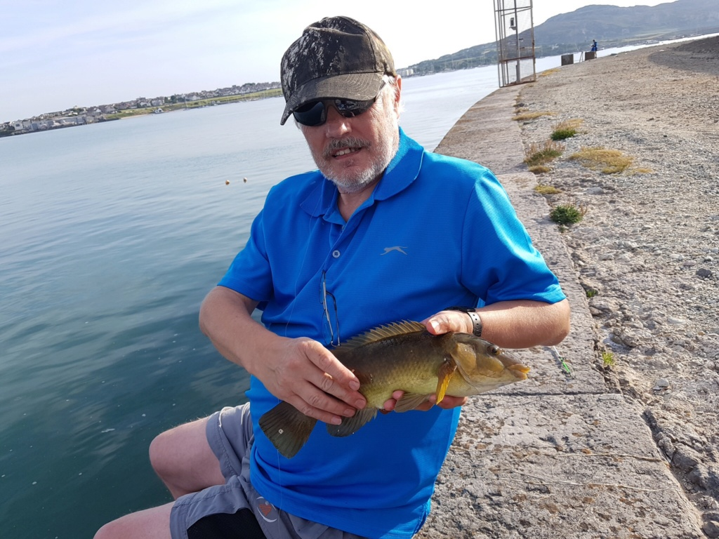 One Tip For Holyhead Breakwater Wrasse Fishing  Image22