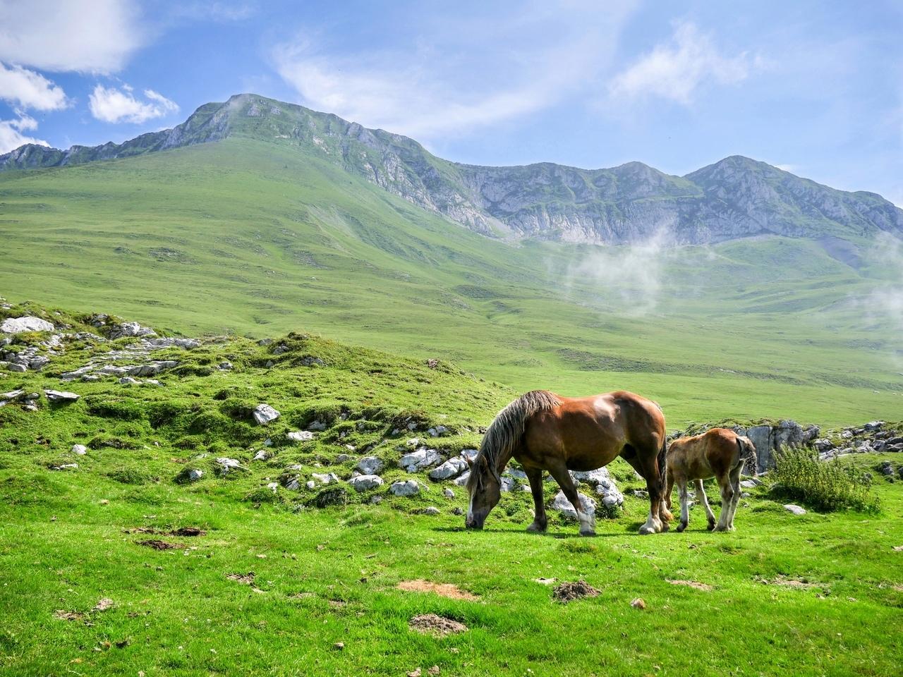 Montagne. Chevaux à Jaout P1030312