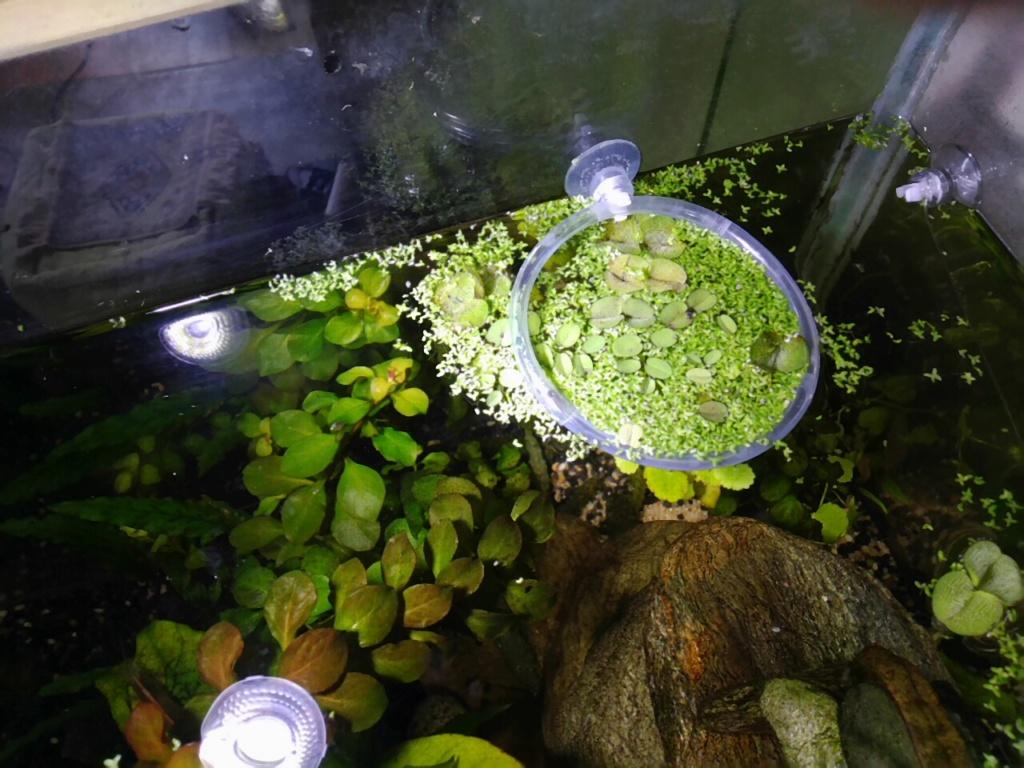 Un bricolage pour diriger les plantes flottantes ? Img_2010